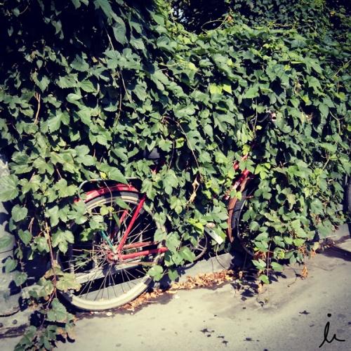 Bici escondida